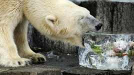 http_cdn.cnn.comcnnnextdamassets170320132828-tokyo-zoo---ueno-zoo---polar-bears